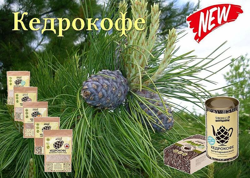 Kedrokofe_2